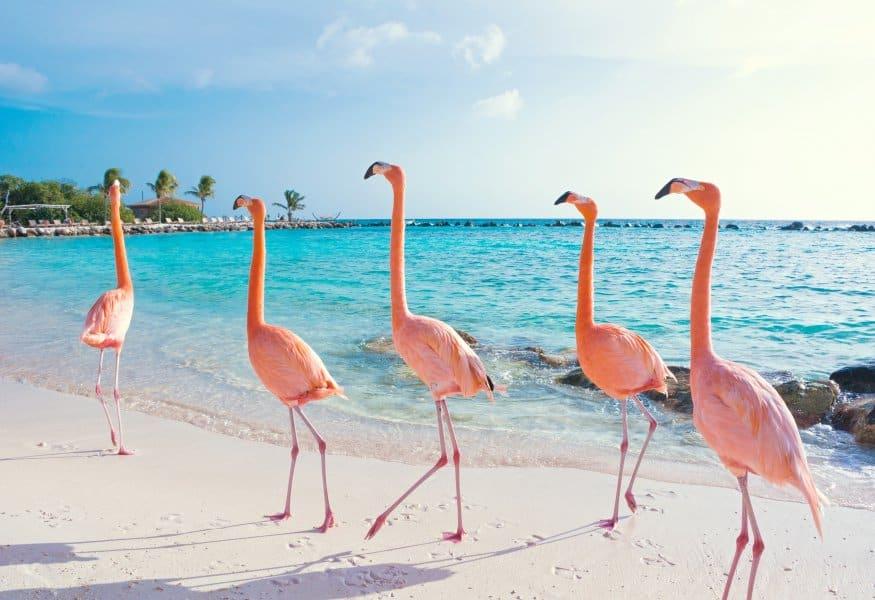 Luxusreisen Aruba
